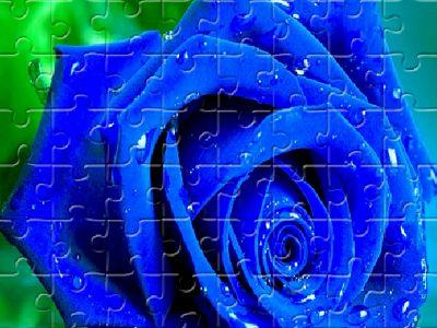 藍玫瑰拼圖