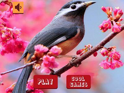 可愛鳥兒拼圖